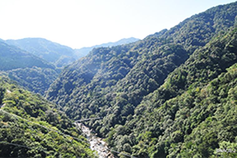 1 万ヘクタールにもおよぶ綾町の照葉樹林帯