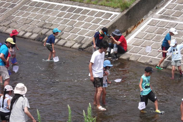 大栗川に入り、うなぎを探す参加者たち
