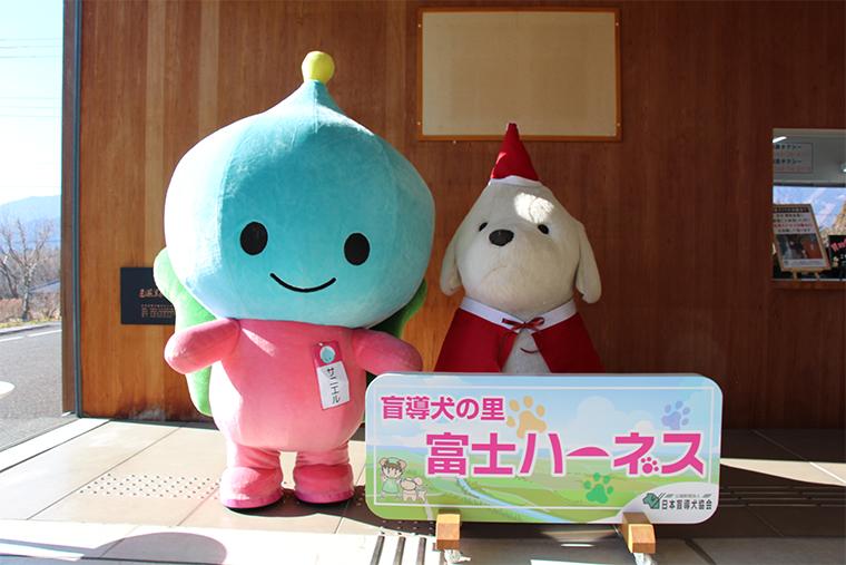 富士ハーネスのエントランスにて。盲導犬クイール人形とサニエル。