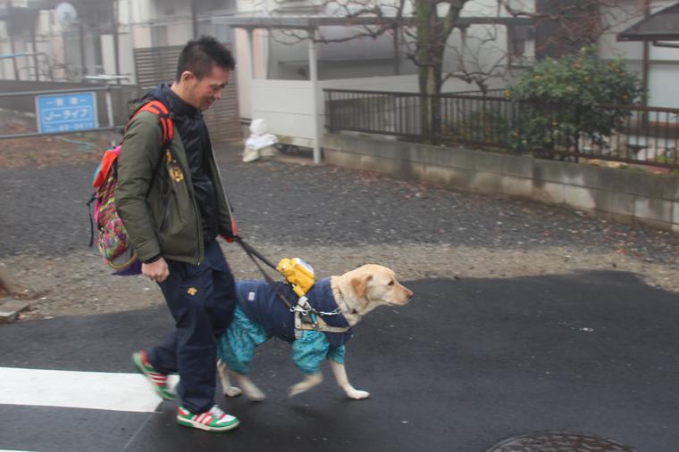 盲導犬のデネブと歩く中澤さん。