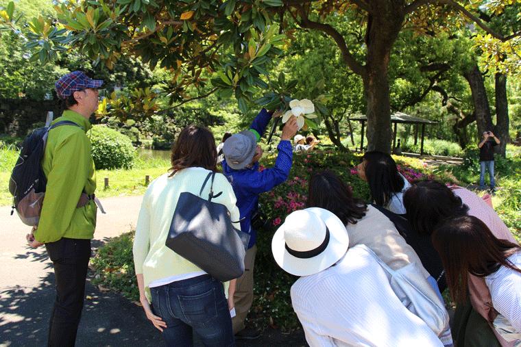 みどりの祭、自然観察会の様子。花びらの中を覗き込む参加者のみなさん。