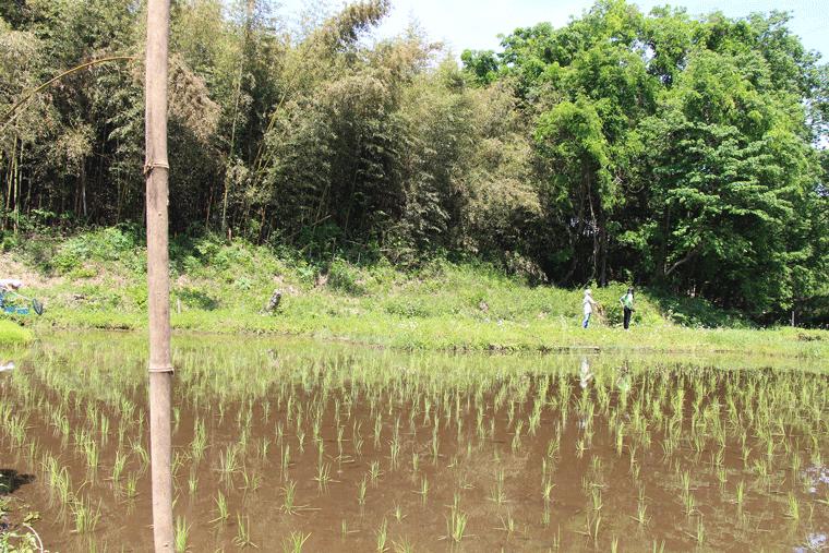 雑木林に囲まれた田んぼ
