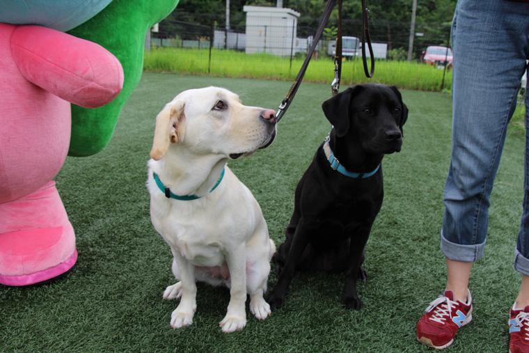 サニエルと盲導犬2頭